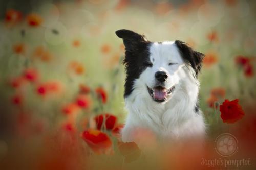 Poppy joy