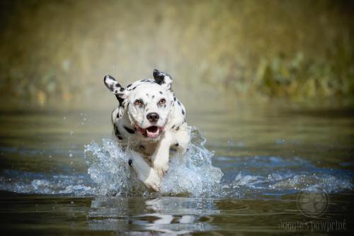 Splashing fun
