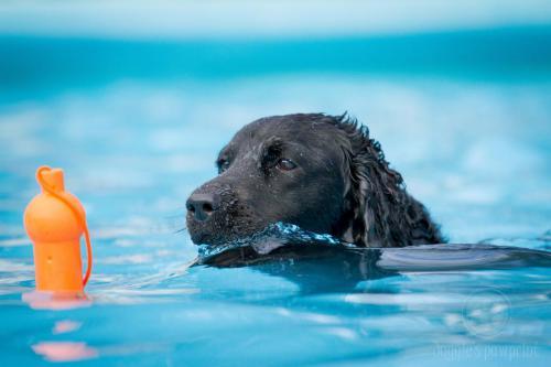 Hondenplons