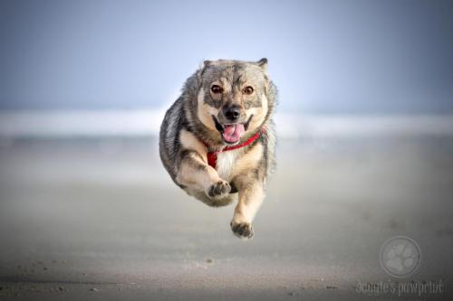 Flying spets