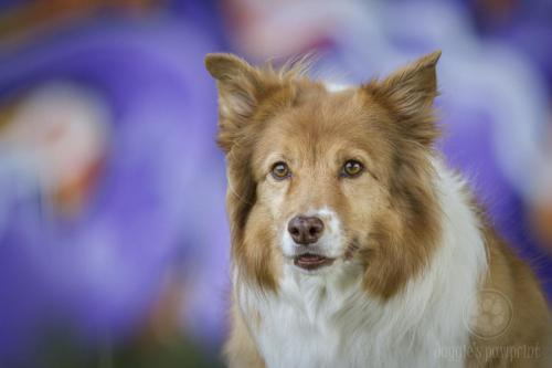 Senior dog in the city