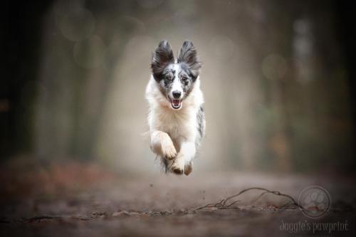 Dashing through the forest